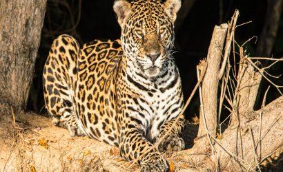 Brazil Wildlife & Nature Adventure