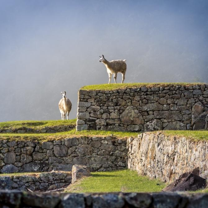 Classic Puru_Galapagos_Machu-Picchu-Terraces-Peru