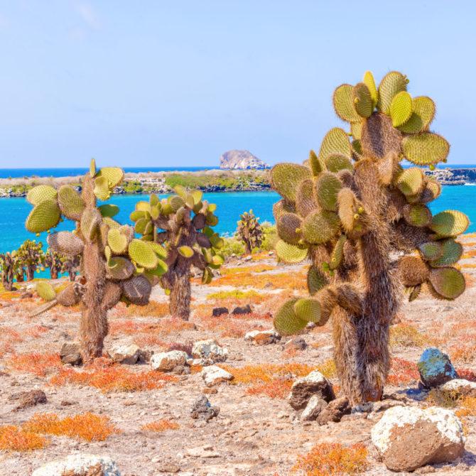 Classic Puru_Galapagos_galapagos-island