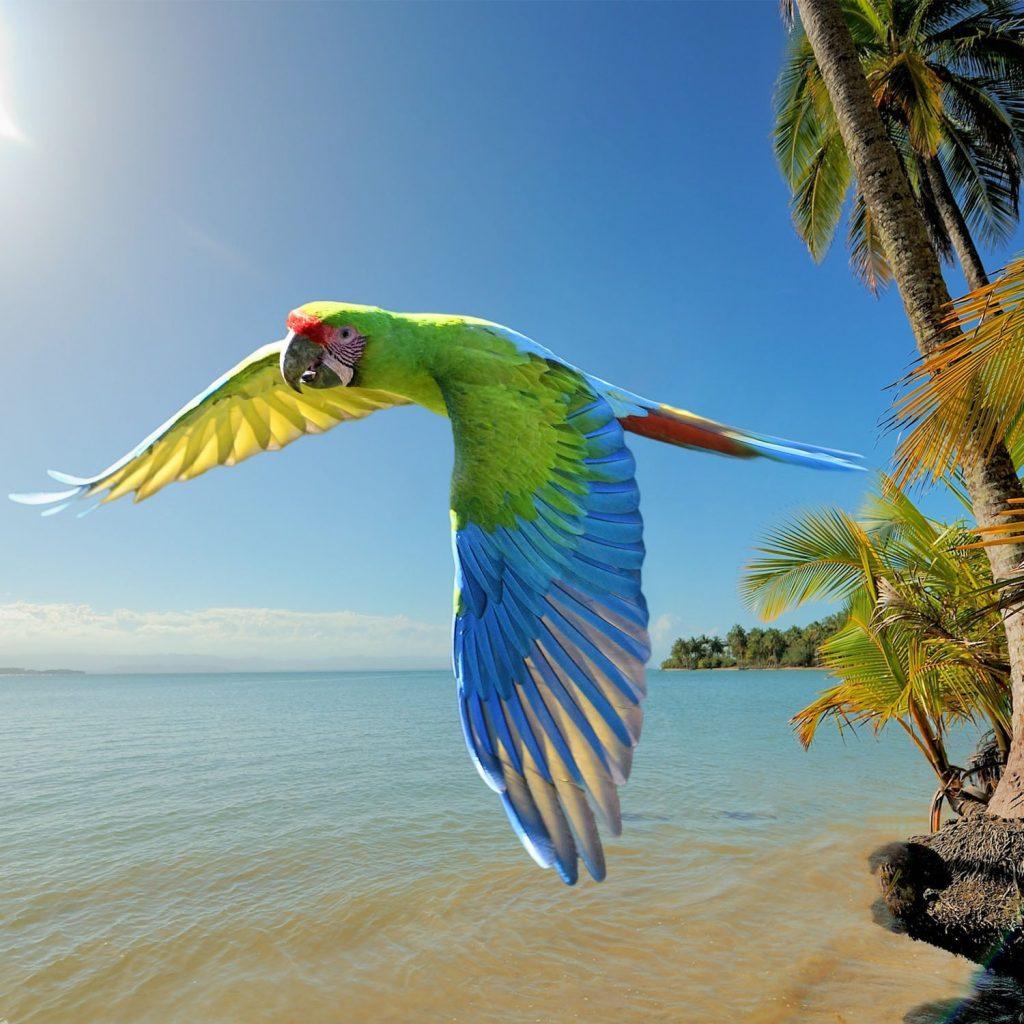 Costa Rica Coast to Coast Family Adventure_2