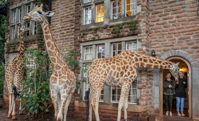 Giraffe Manor with Safari and Beach