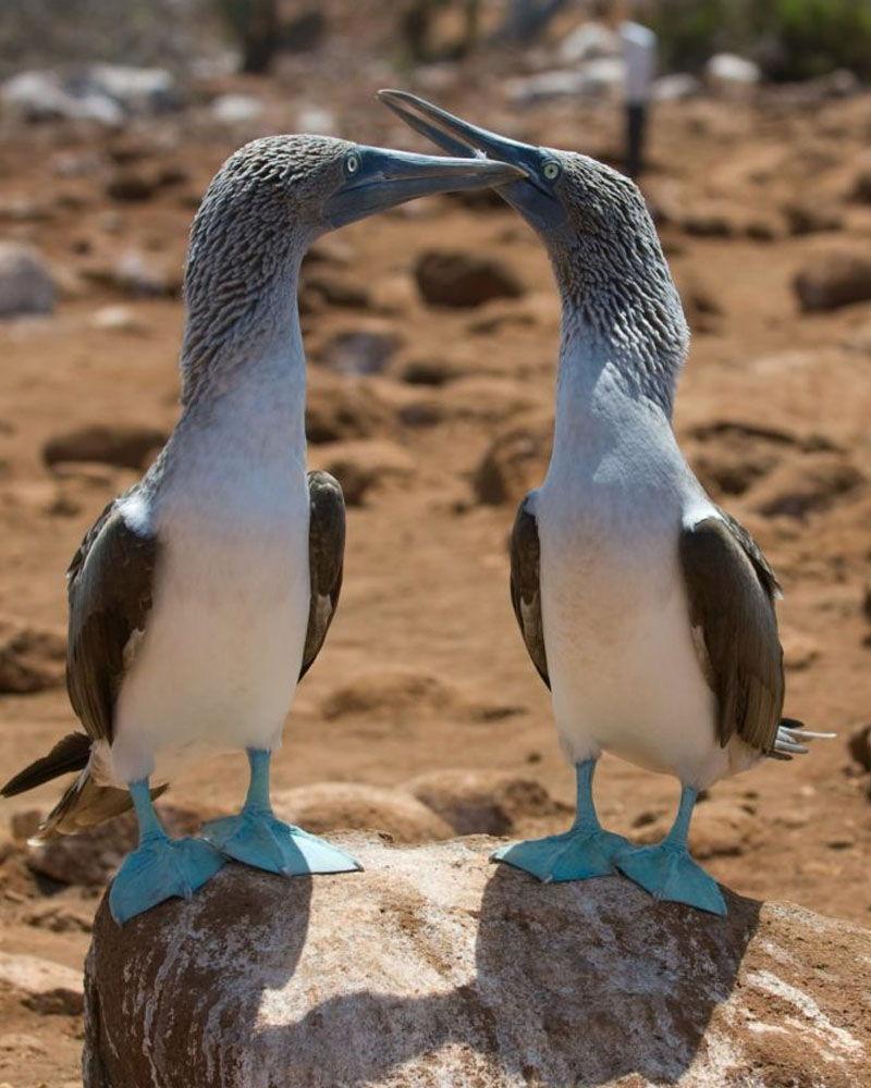 Galapagos Classic Luxury_2