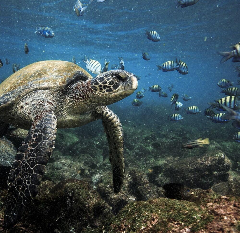 Galapagos Classic Luxury_5