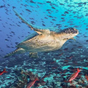 Indulgent Luxury Galapagos